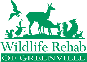 Wildlife Rehab of Greenville