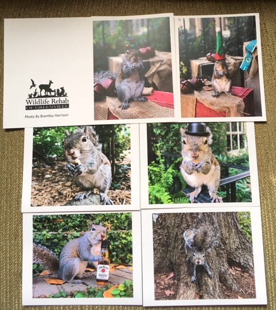 Bella the Squirrel Gift Cards