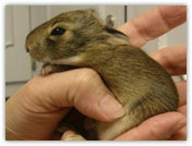 Wildlife Rehab